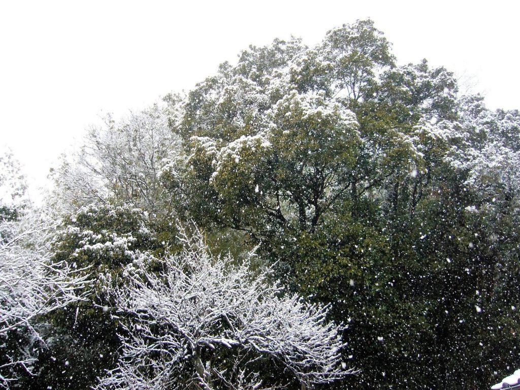 雪が降る田舎