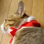 クリスマスと冬至とバラの花 (nya.57)