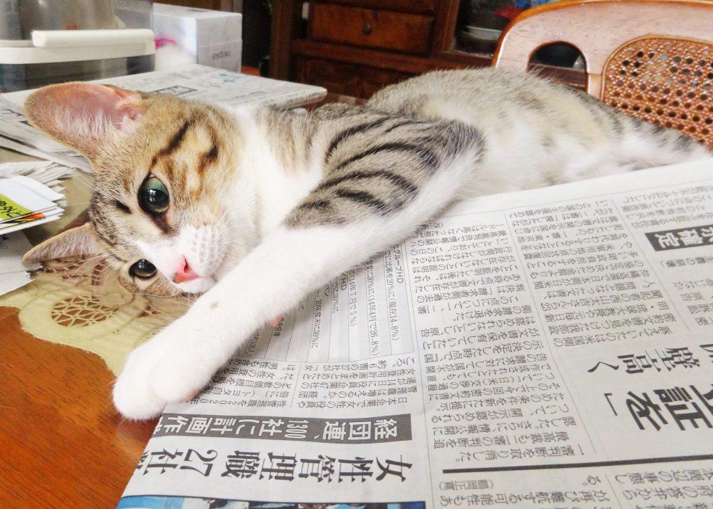 ねこ、風太と新聞