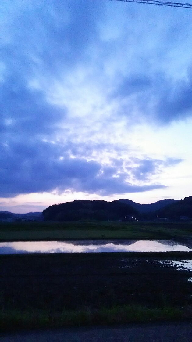 空を映す水田