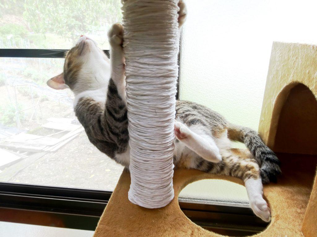 ねこ、風太キャットタワー