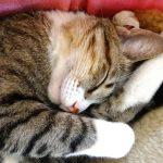 フォトギャラリー 風太(日本猫)②