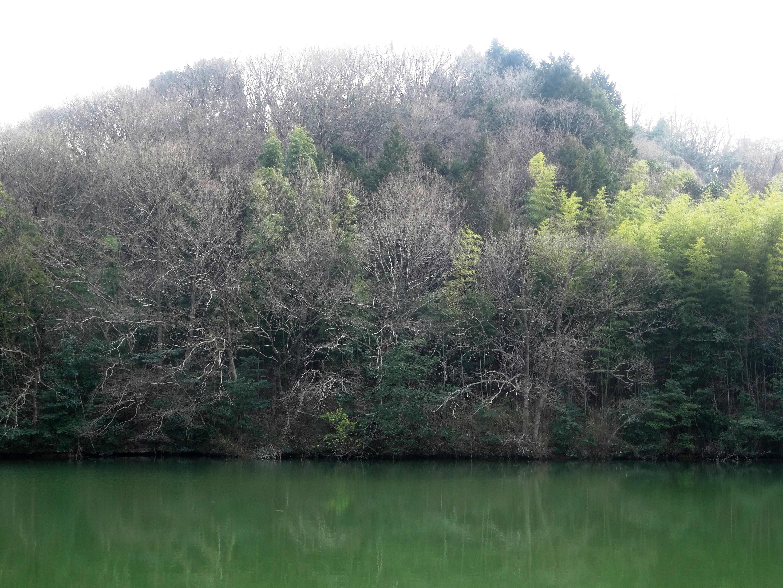 春の池 芽吹き前
