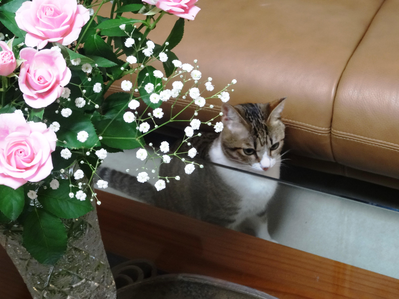 ねこ、風太 薔薇
