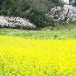 フォトギャラリー 田舎の風景(まいにち田舎 春 2017.04)