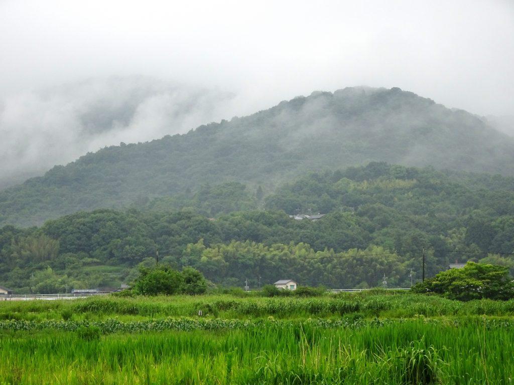 雨上がりの梅雨の田舎