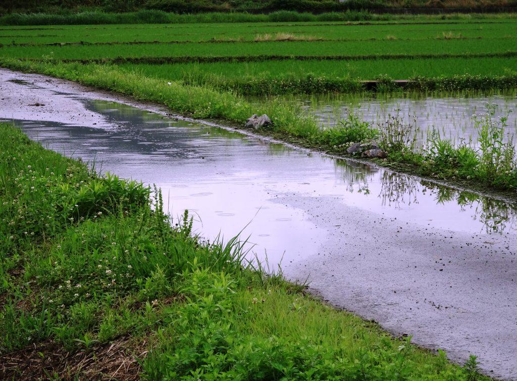水たまりに落ちる雨