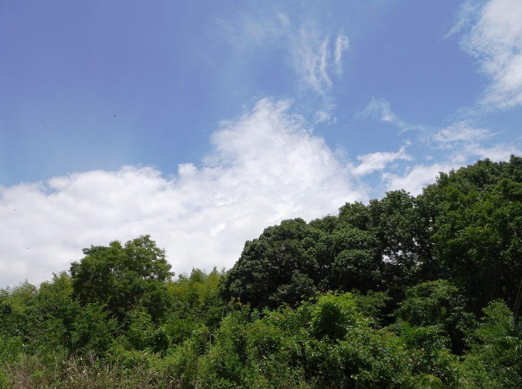 田舎の夏の空