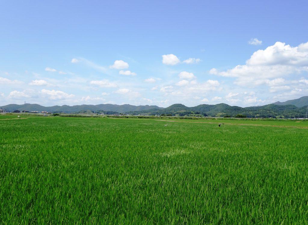 盛夏の空と田んぼ