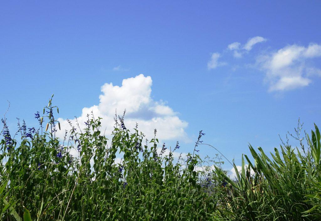 盛夏の空と草