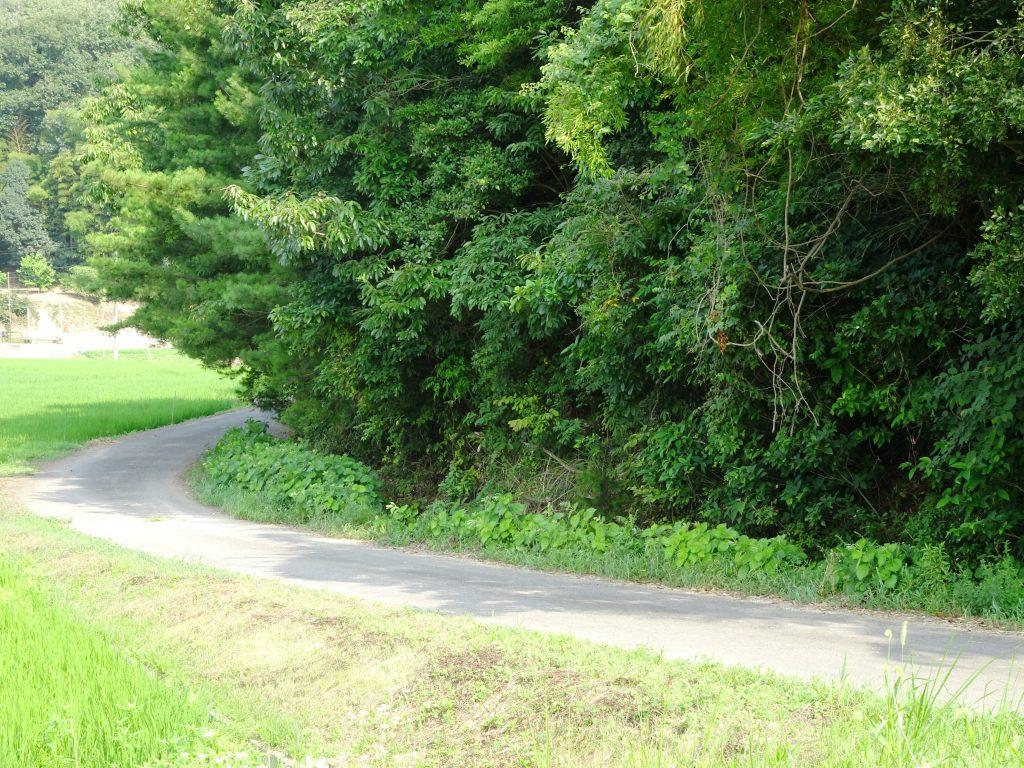 田舎の小径、短い木陰