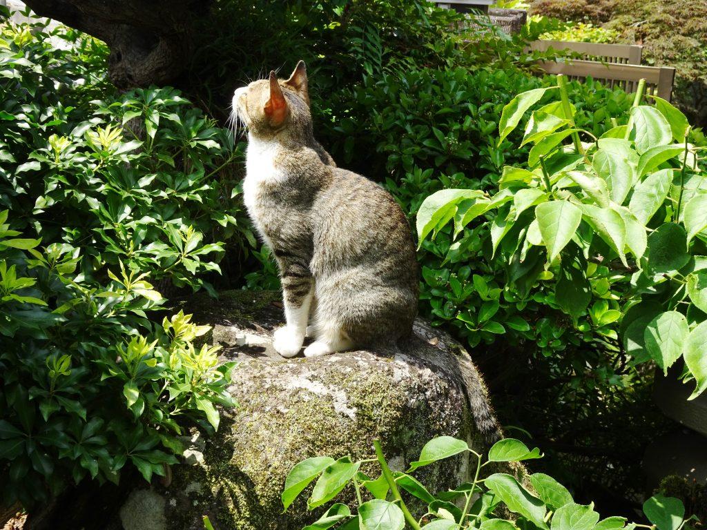 ねこ、風太 夏の庭