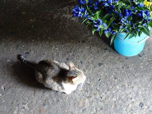 ねこ、風太 仏花