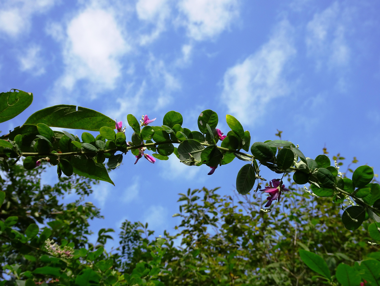空にかかる萩の一枝