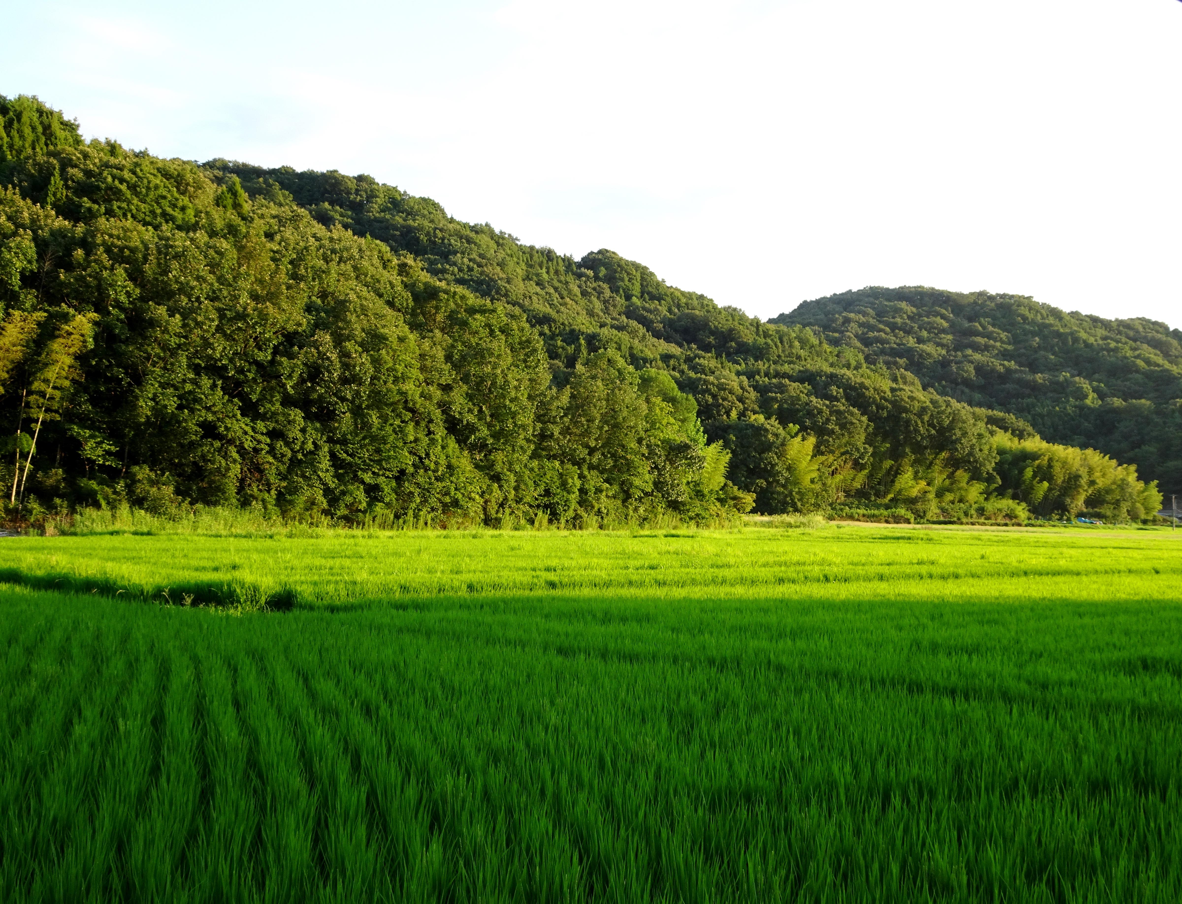 初秋の田んぼ夕景