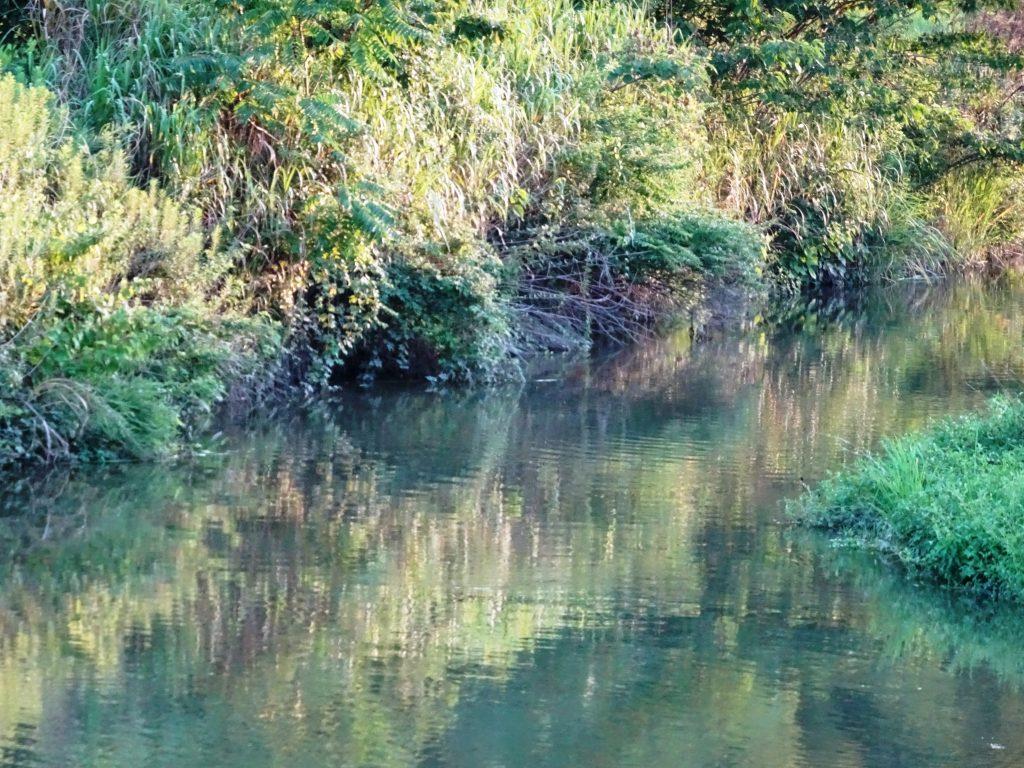 夕景 川面に移る草