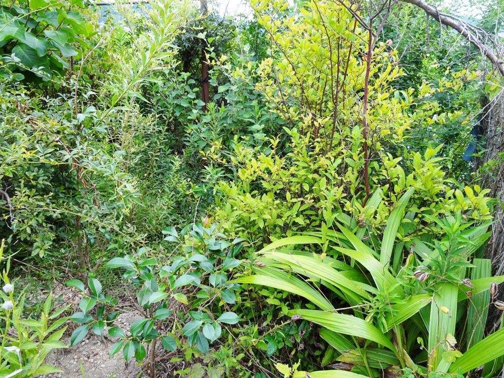 我が家の花壇 初秋