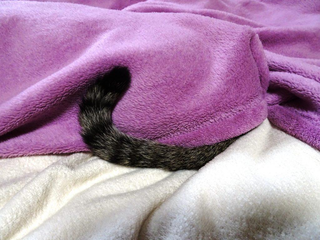 ねこ、風太 寝ぼけ