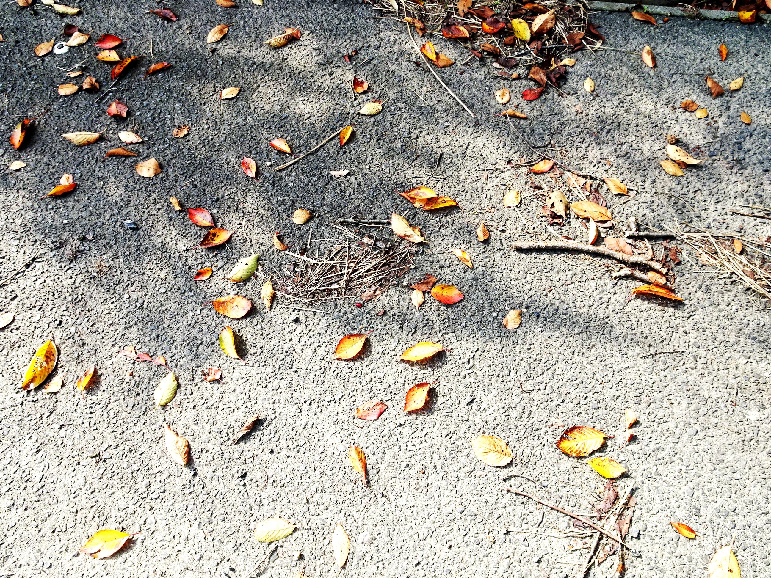 桜の木の下の道