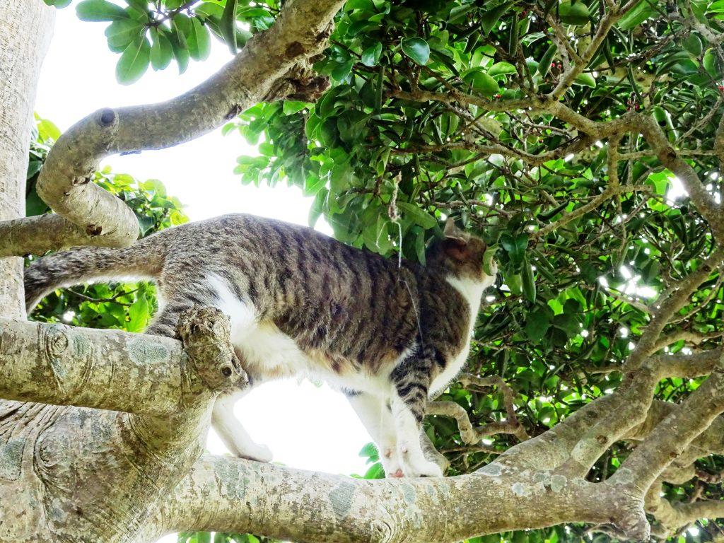 ねこ、風太 木の上