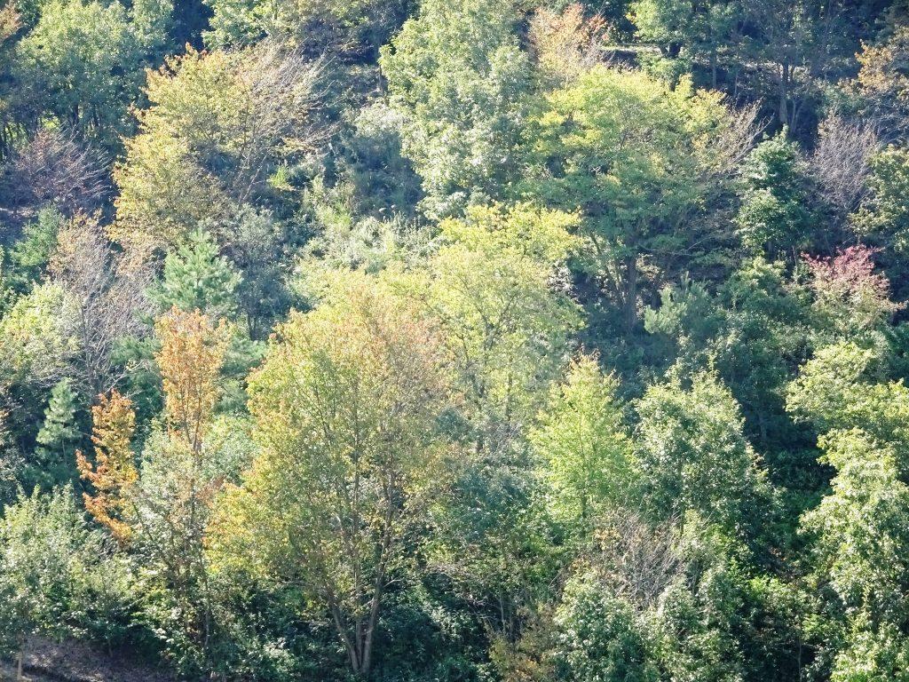 田舎の秋の山
