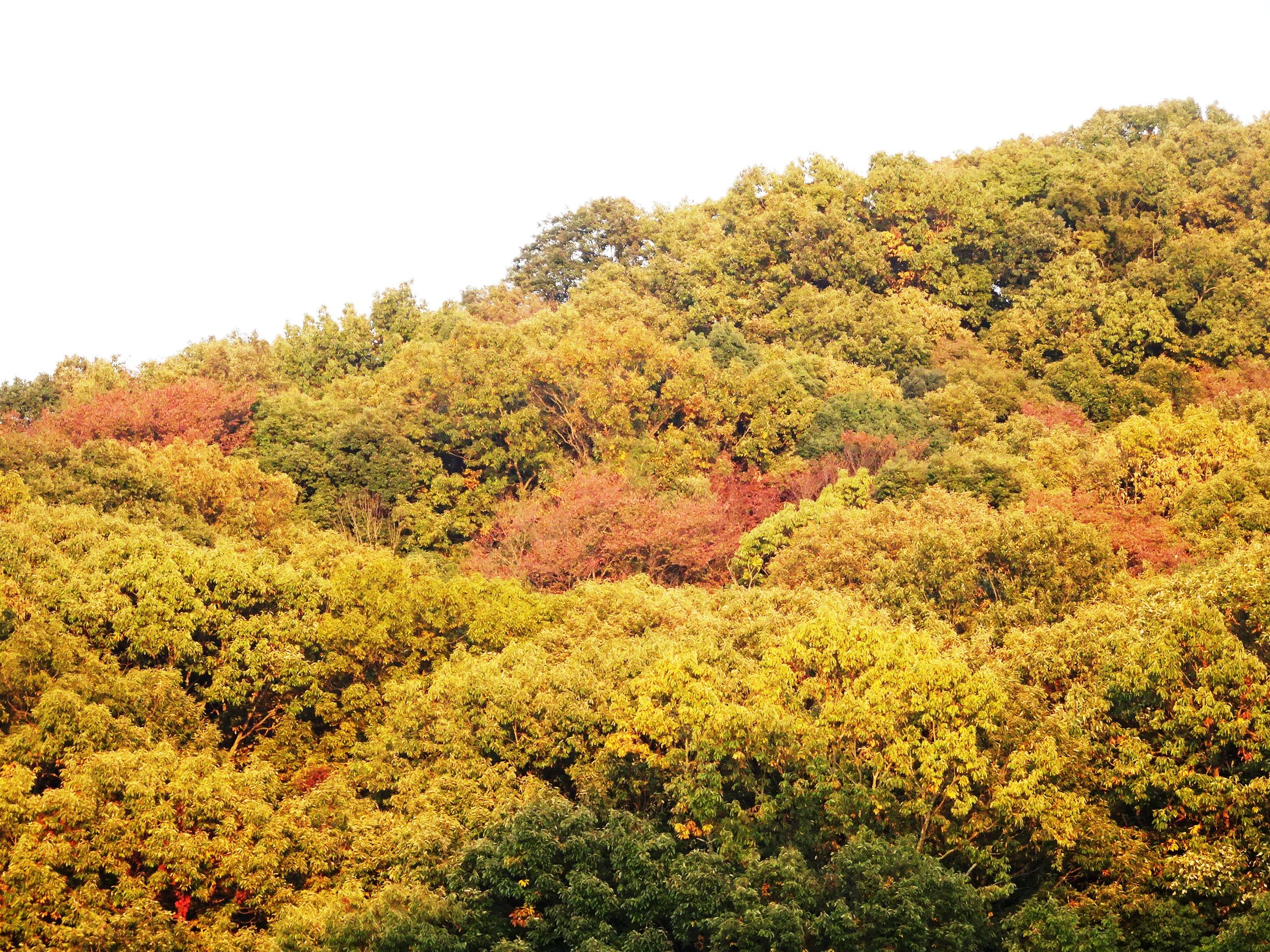 夕暮れ秋の山