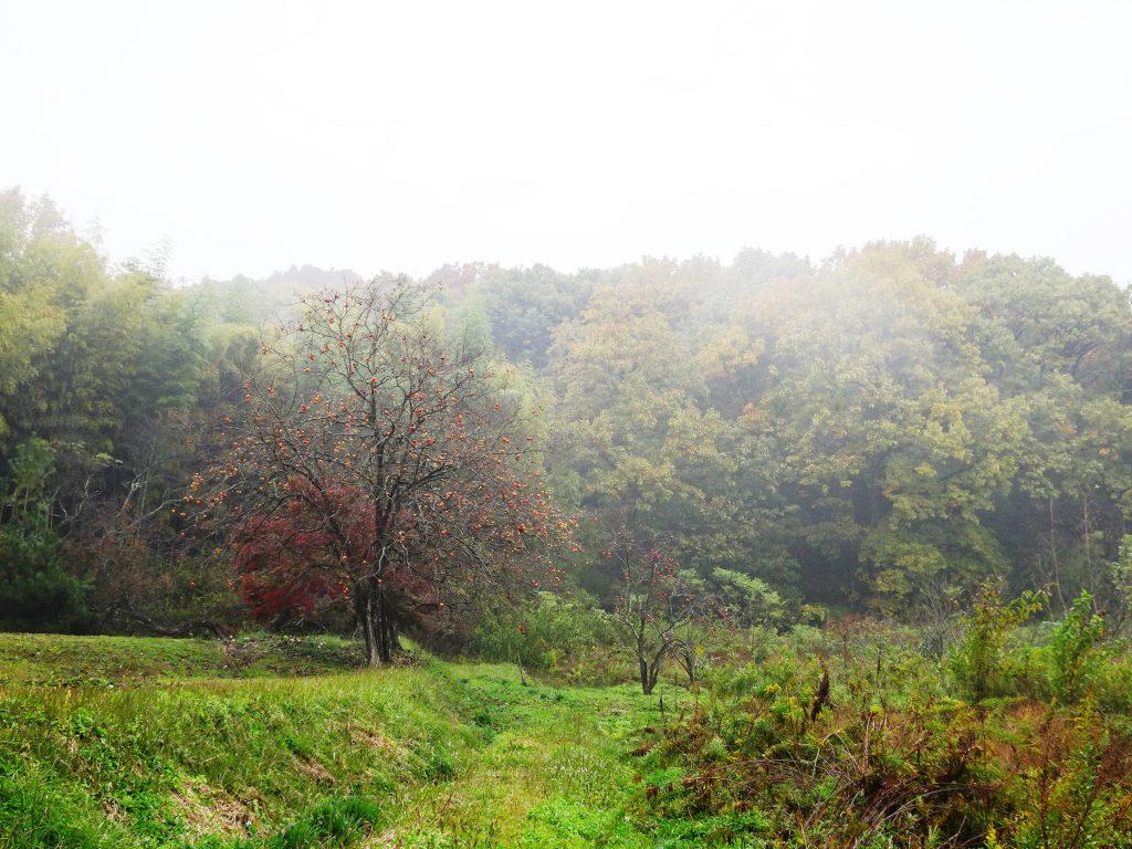 雨の山 柿の木