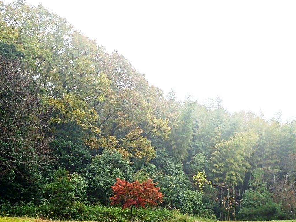 雨の山 紅葉