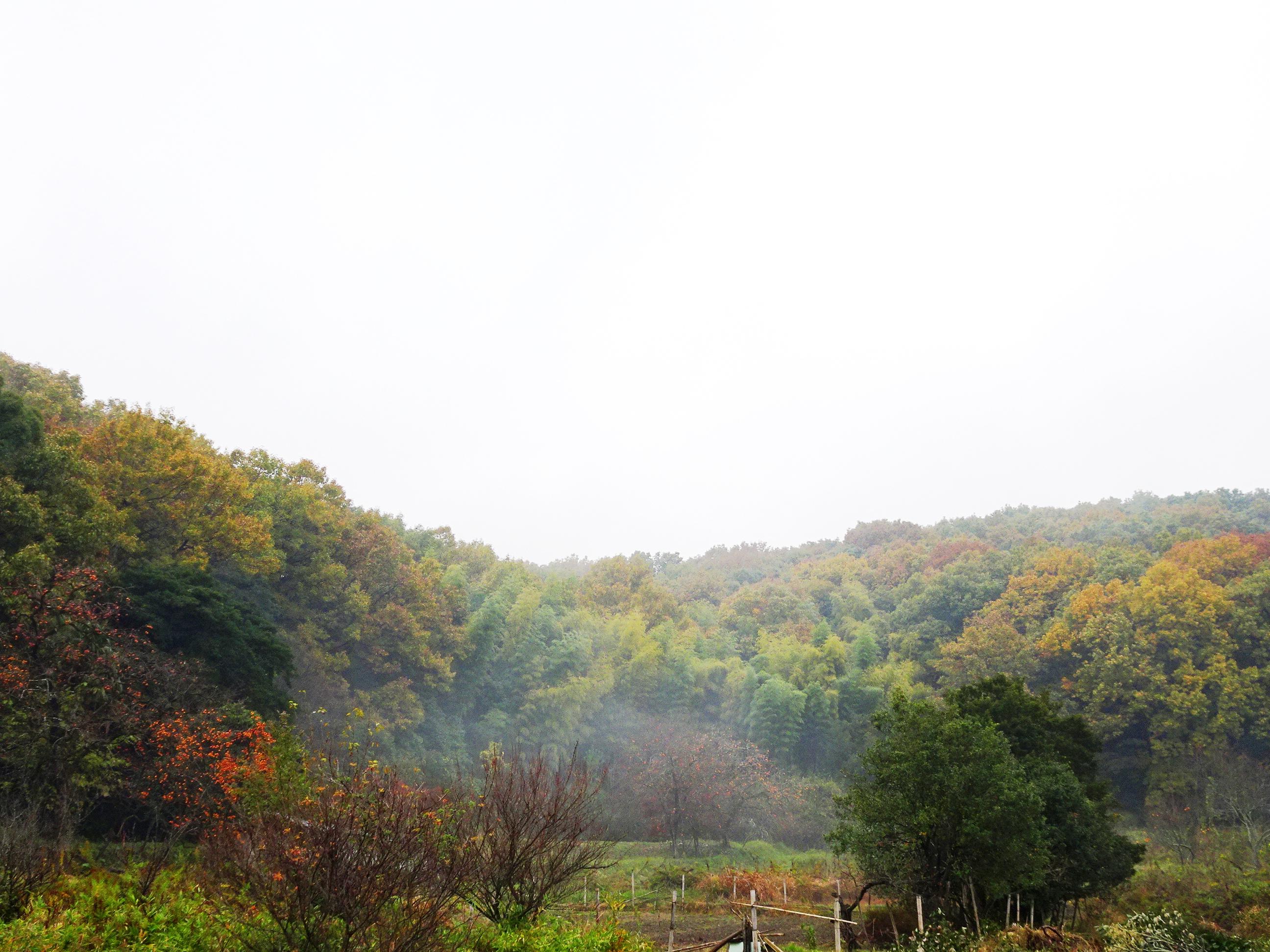 雨上がり 秋の山