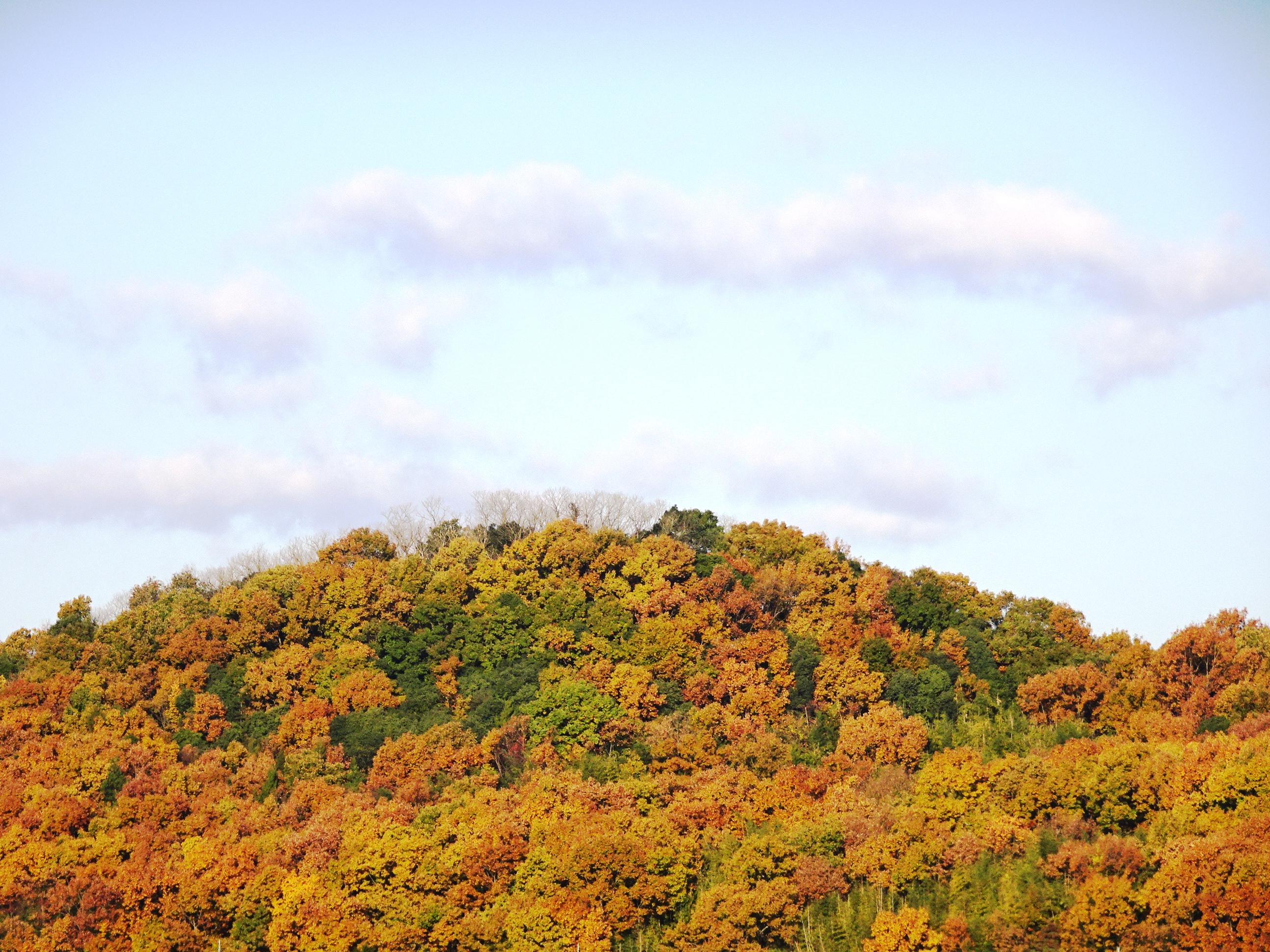 良く晴れた秋の朝