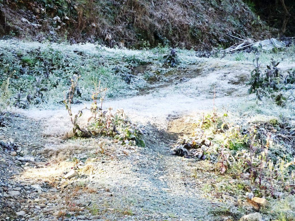 霜の降りたあぜ道