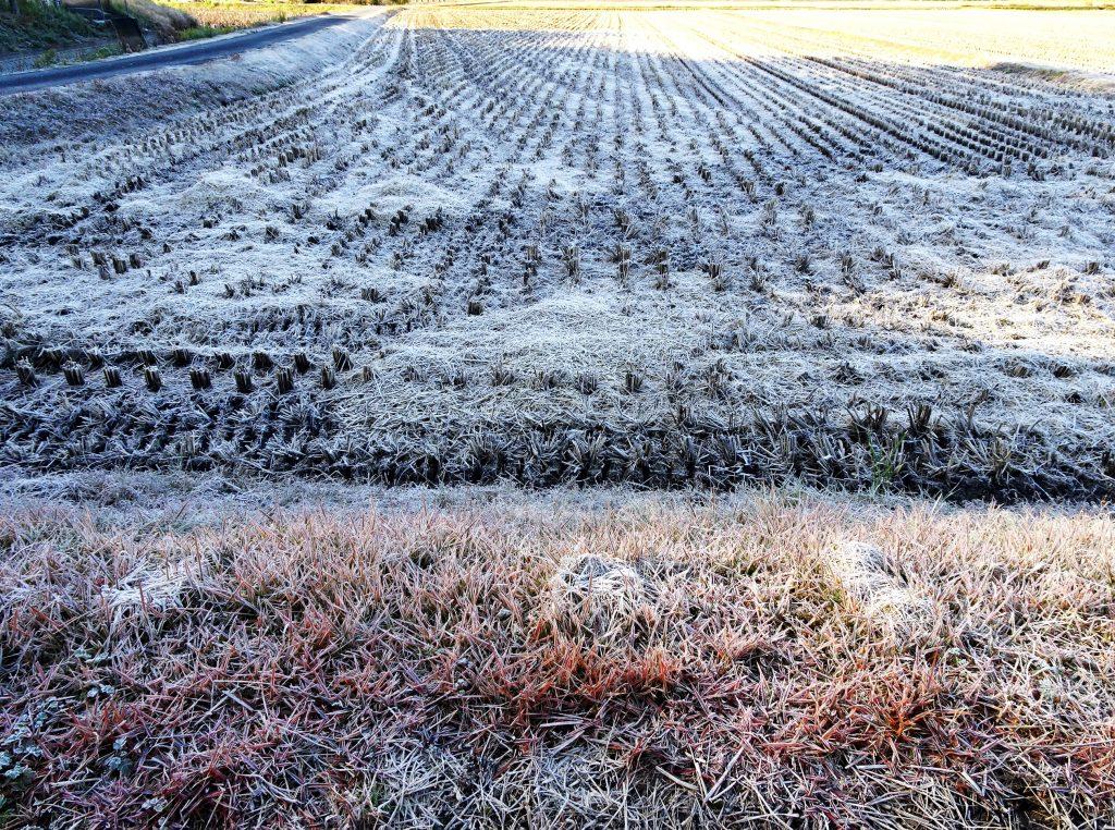 霜の降りた田んぼ