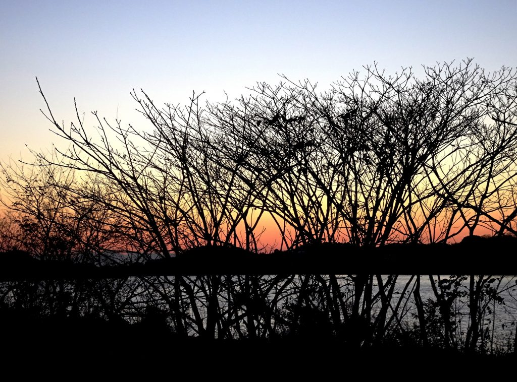 初冬 川辺の夕景