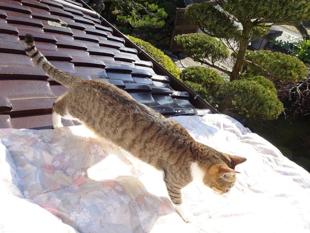 ねこ、風太 屋根