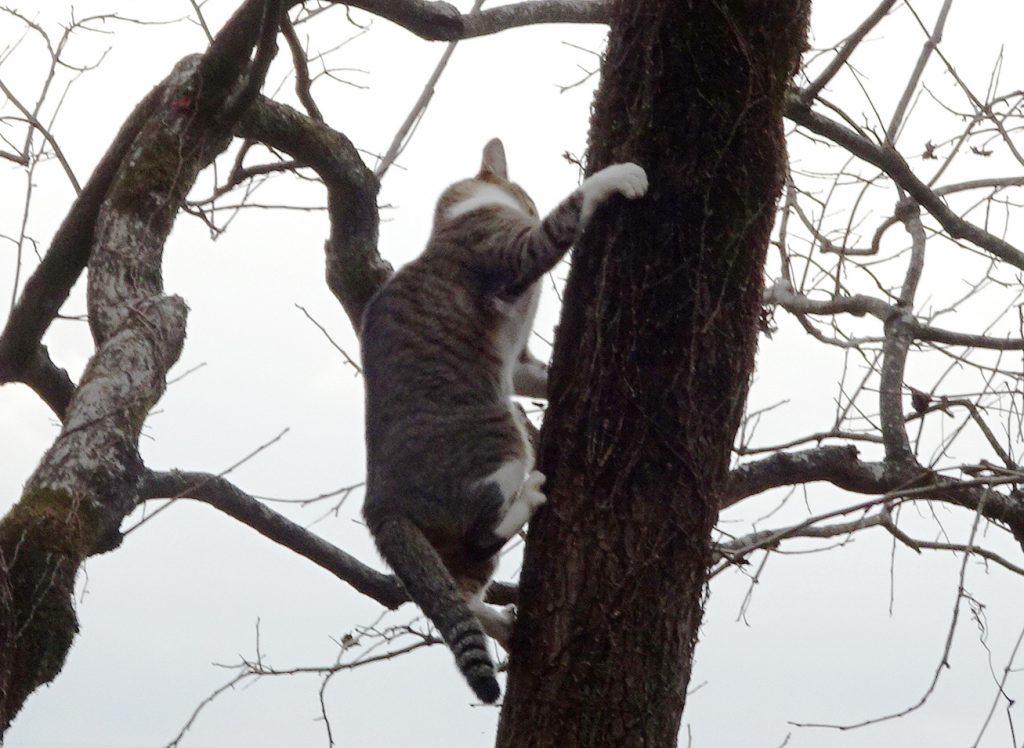 ねこ、風太 木登り
