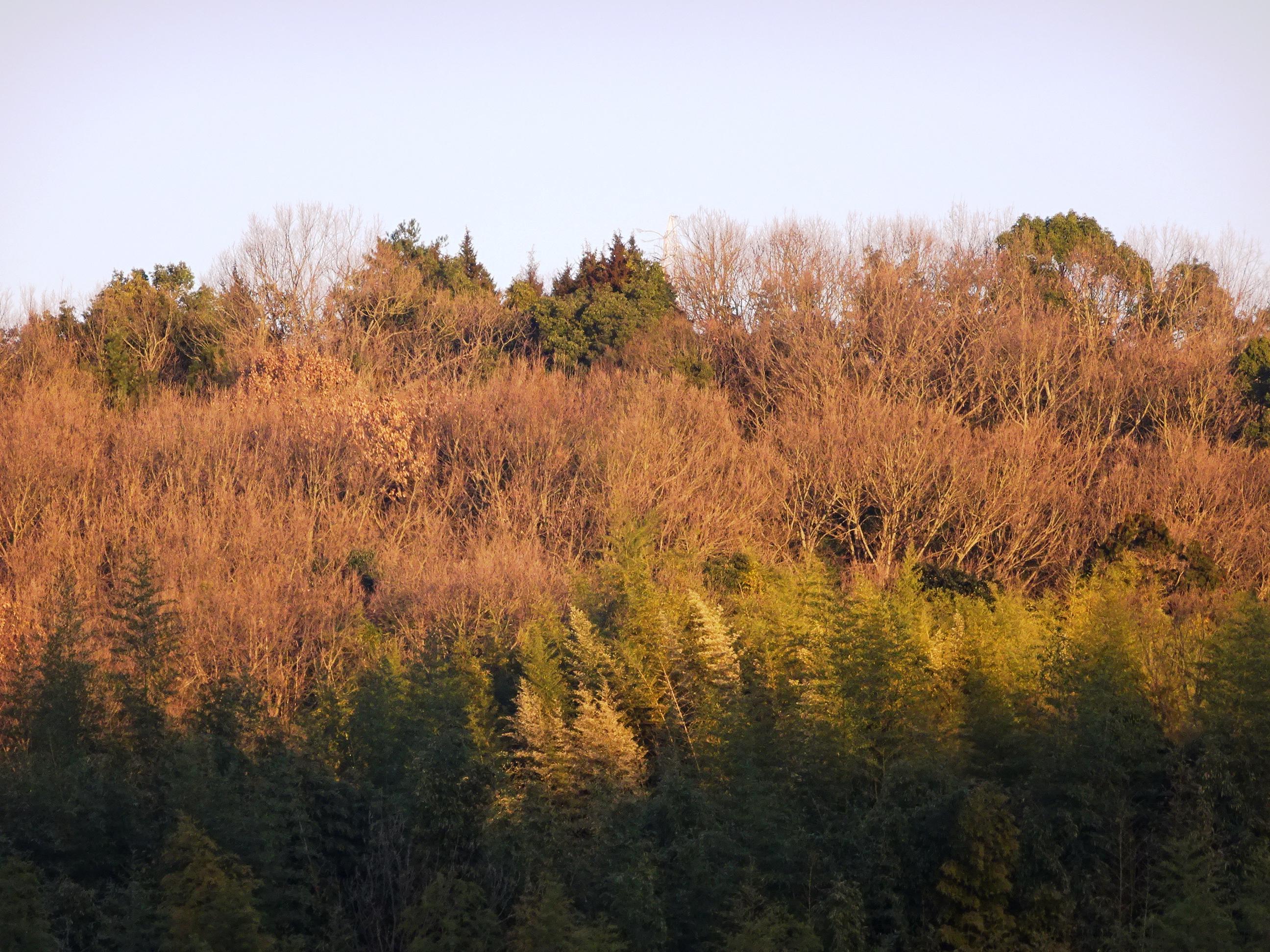 朝日 冬の山