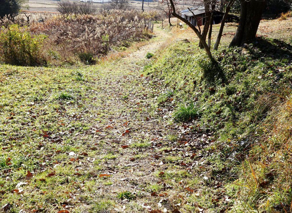 冬の田舎道