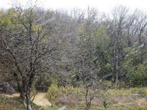 雪花が散る