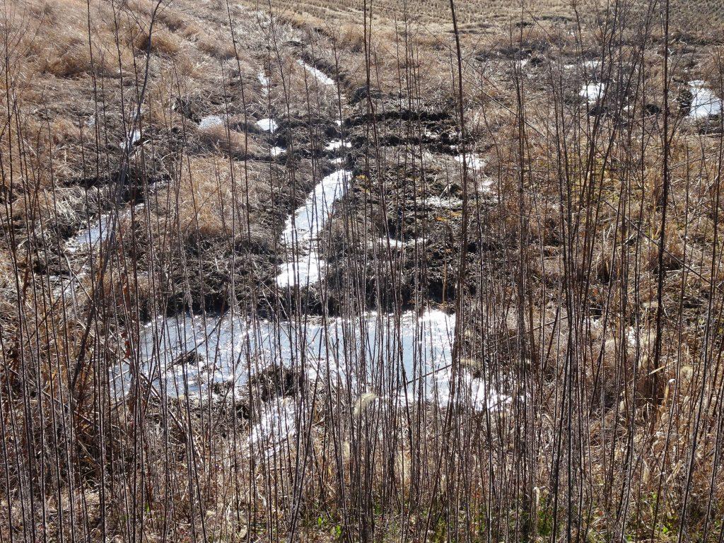 田んぼも氷
