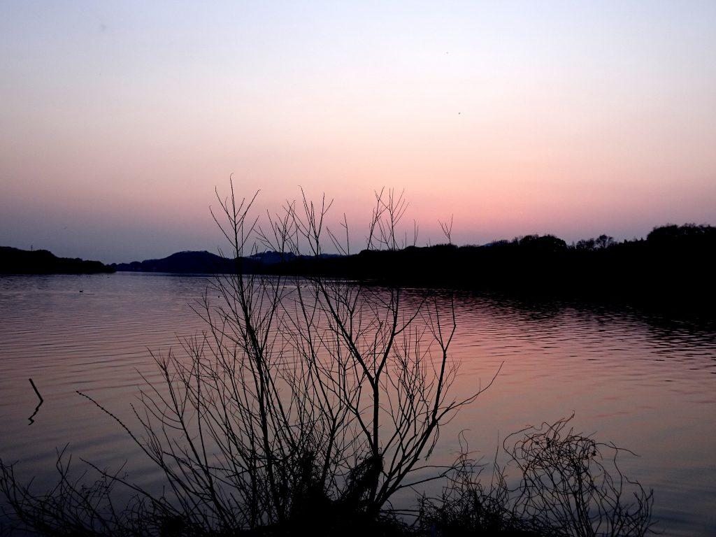 早春 川辺の夕景