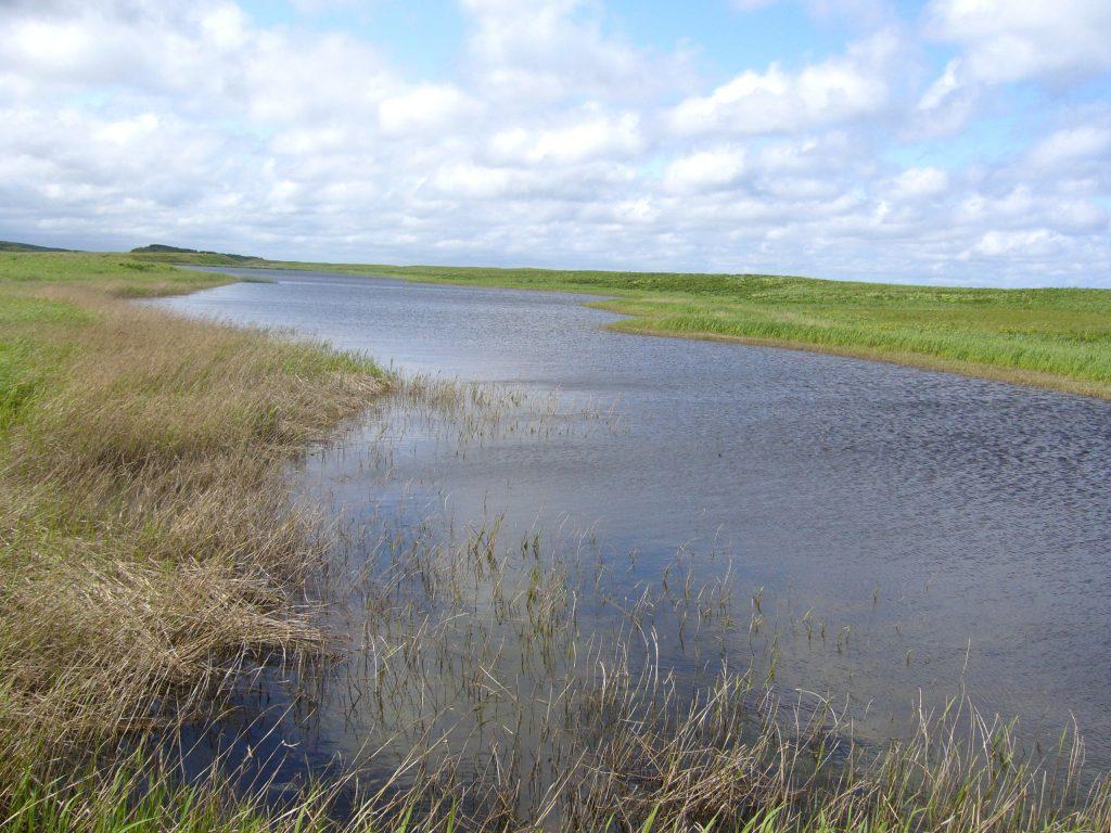 宗谷の湿原