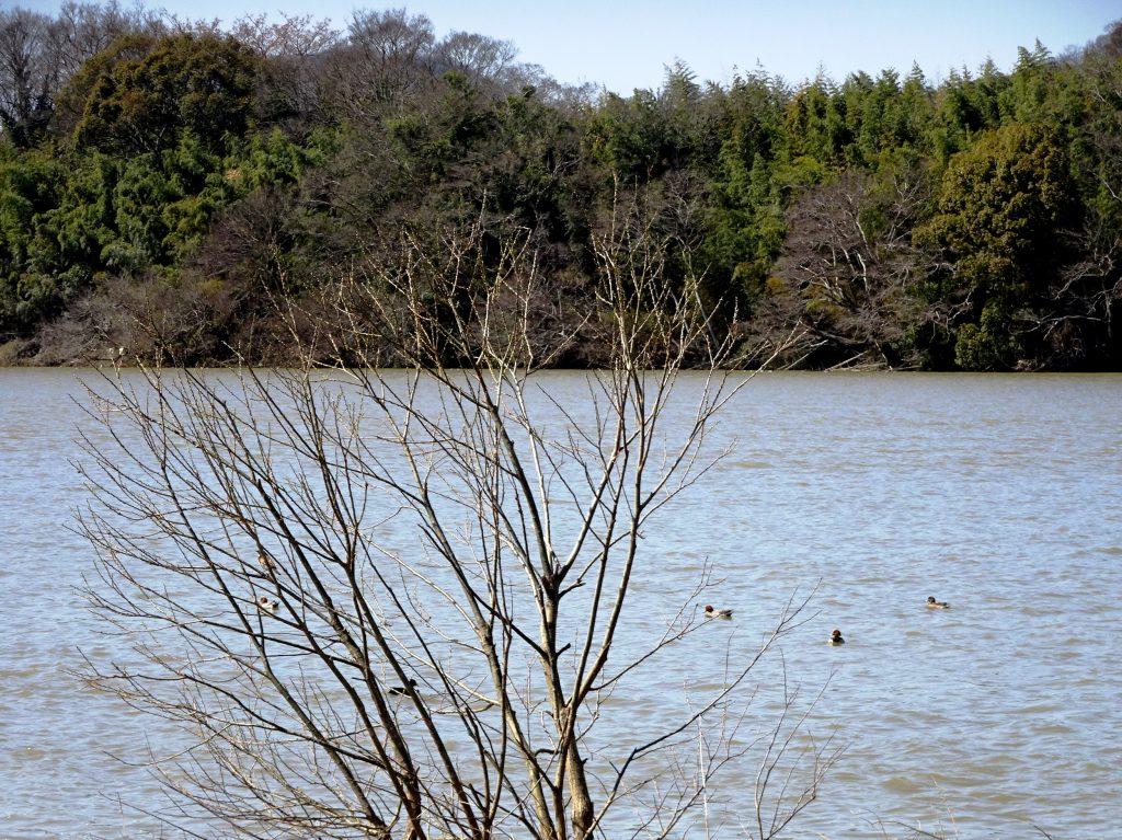 早春の河川敷