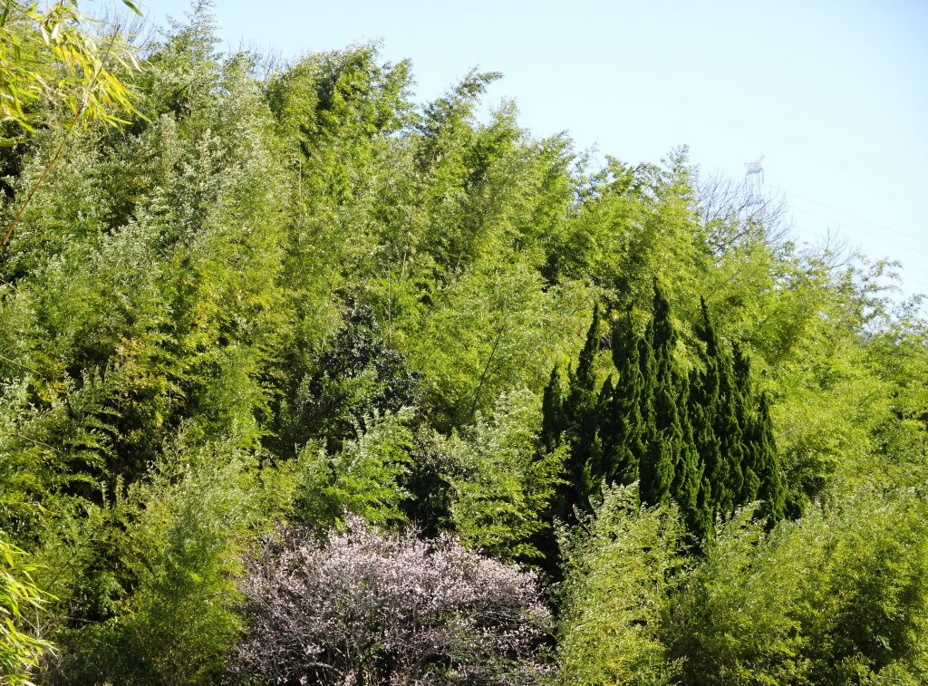 薮の中の梅