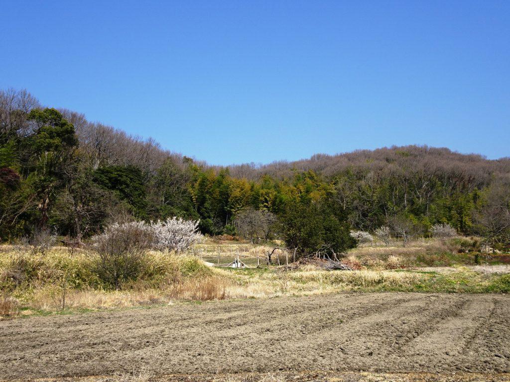 梅が咲いた田舎