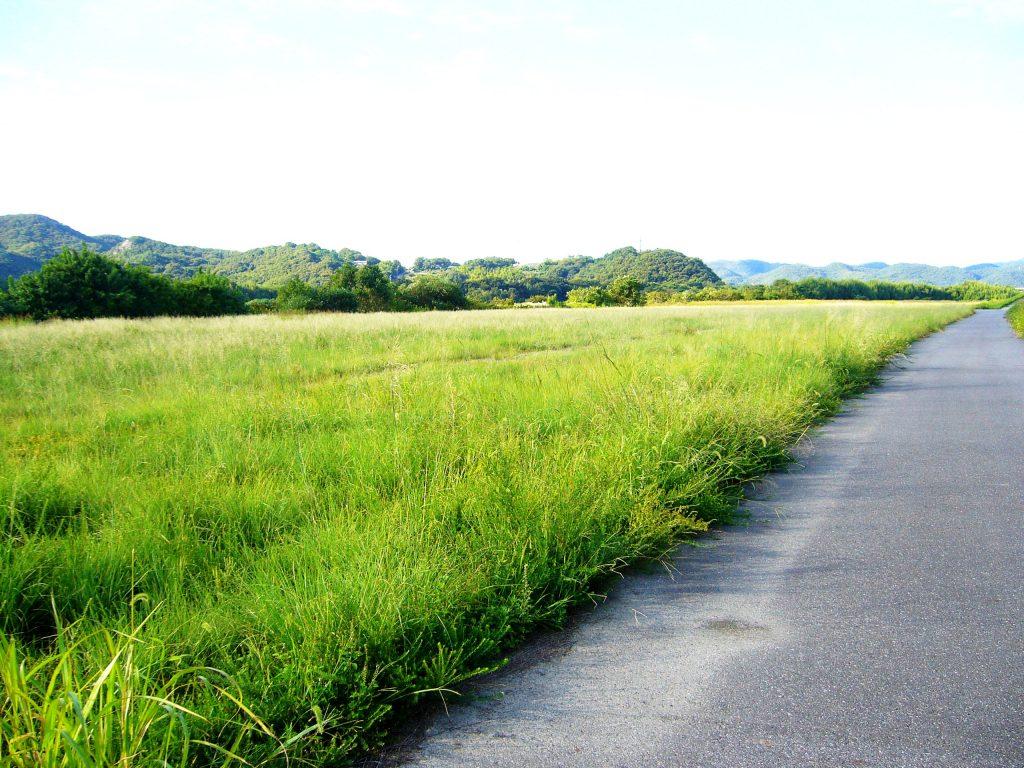 河川敷 遊歩道