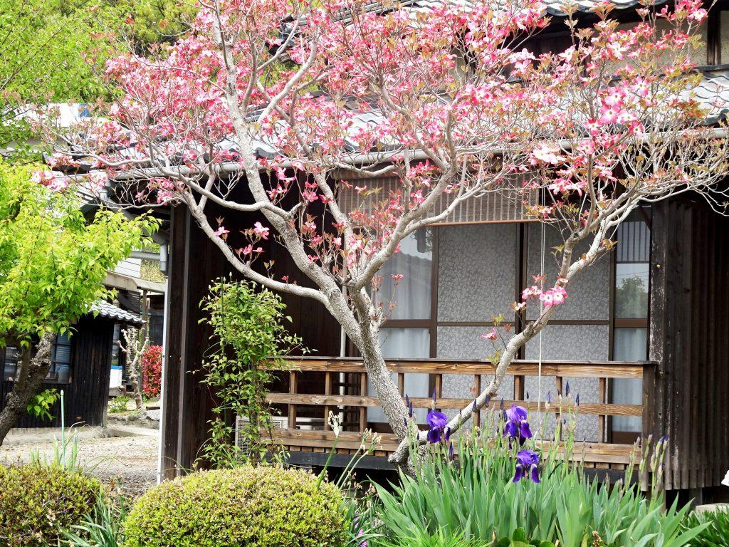 花水木とアイリス