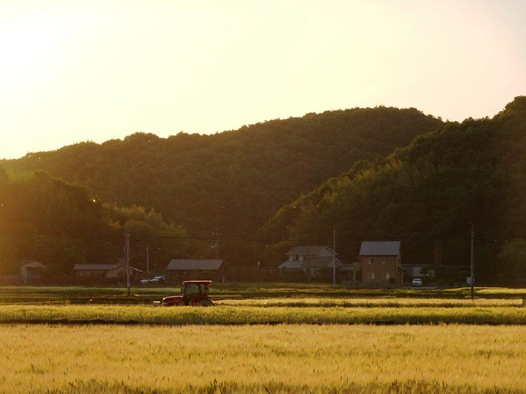 初夏の夕景