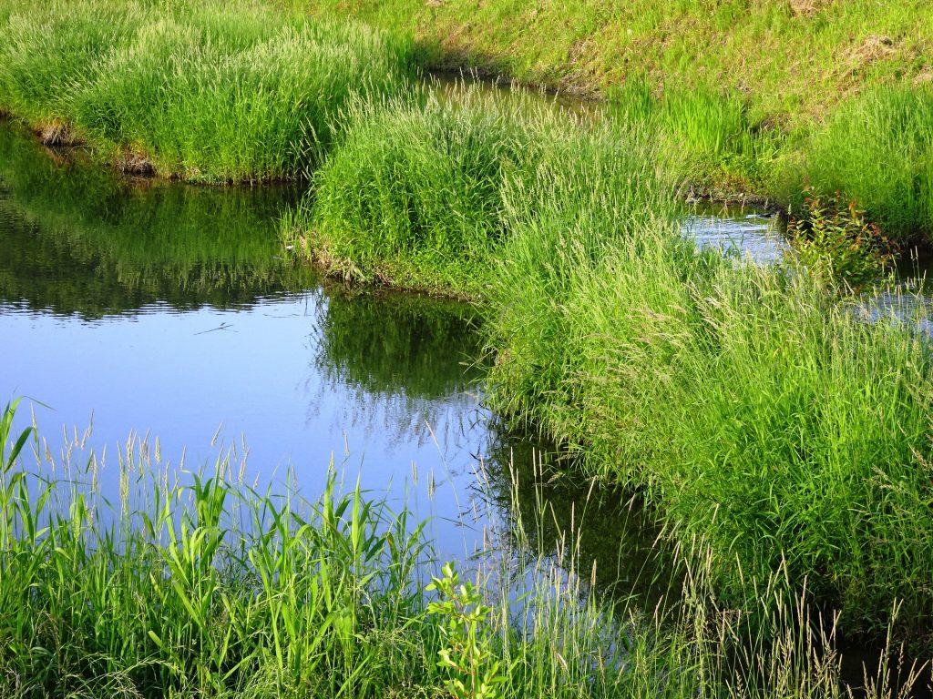 初夏の川辺