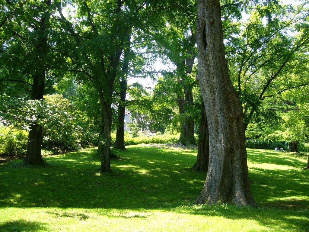 木陰 札幌 北海道大学植物園