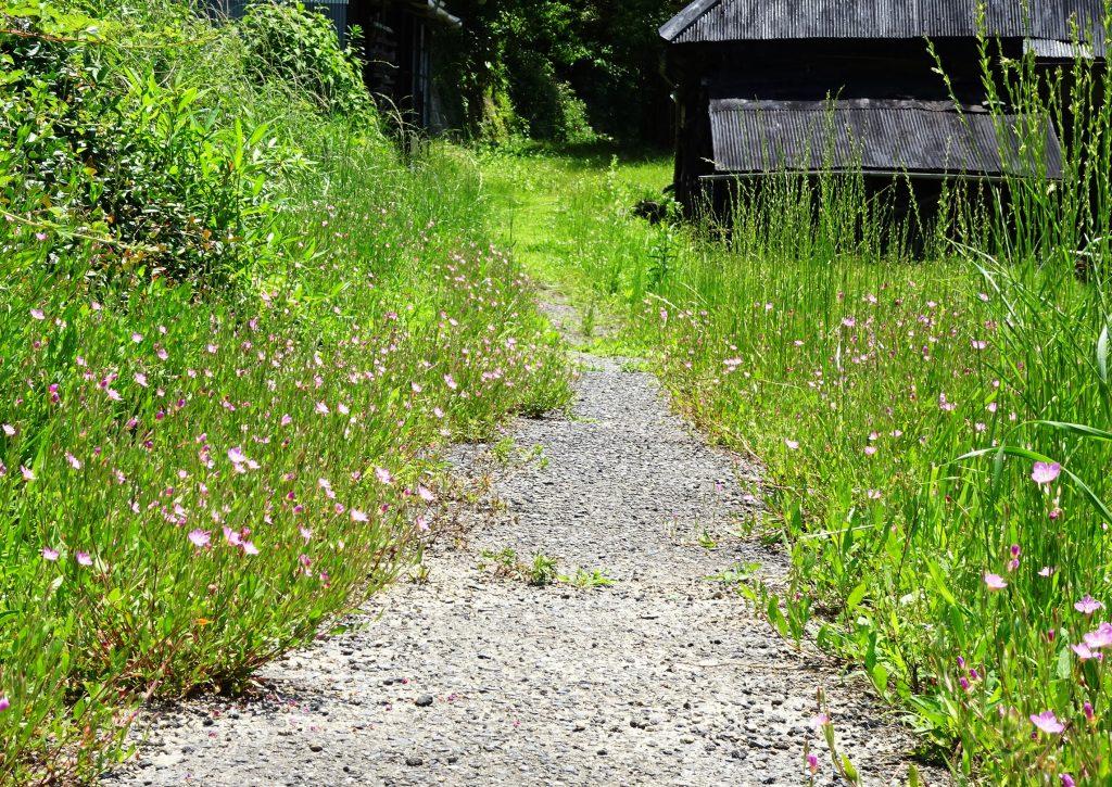 初夏の田舎道